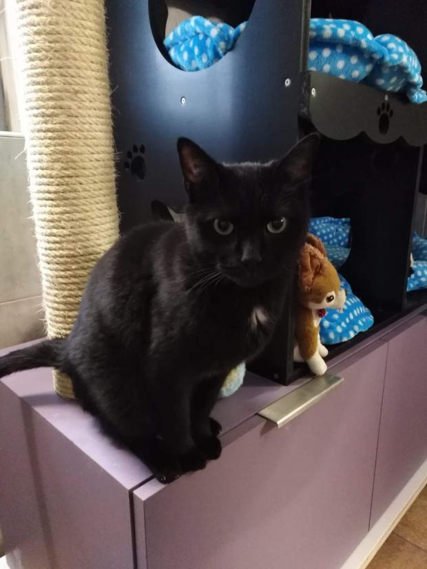 Adopter RIO, chat male de 6 ans