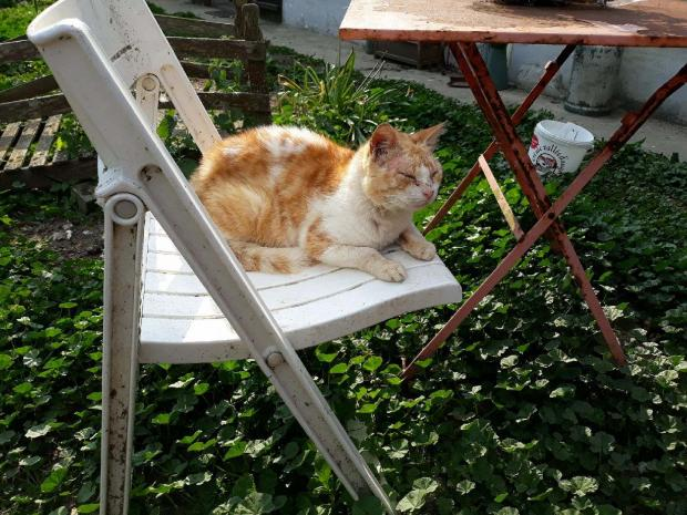 Adopter TIKKI, chat europeen male de 8 ans