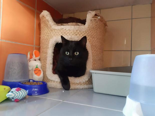 Adopter ROMEO, chat male de 5 ans