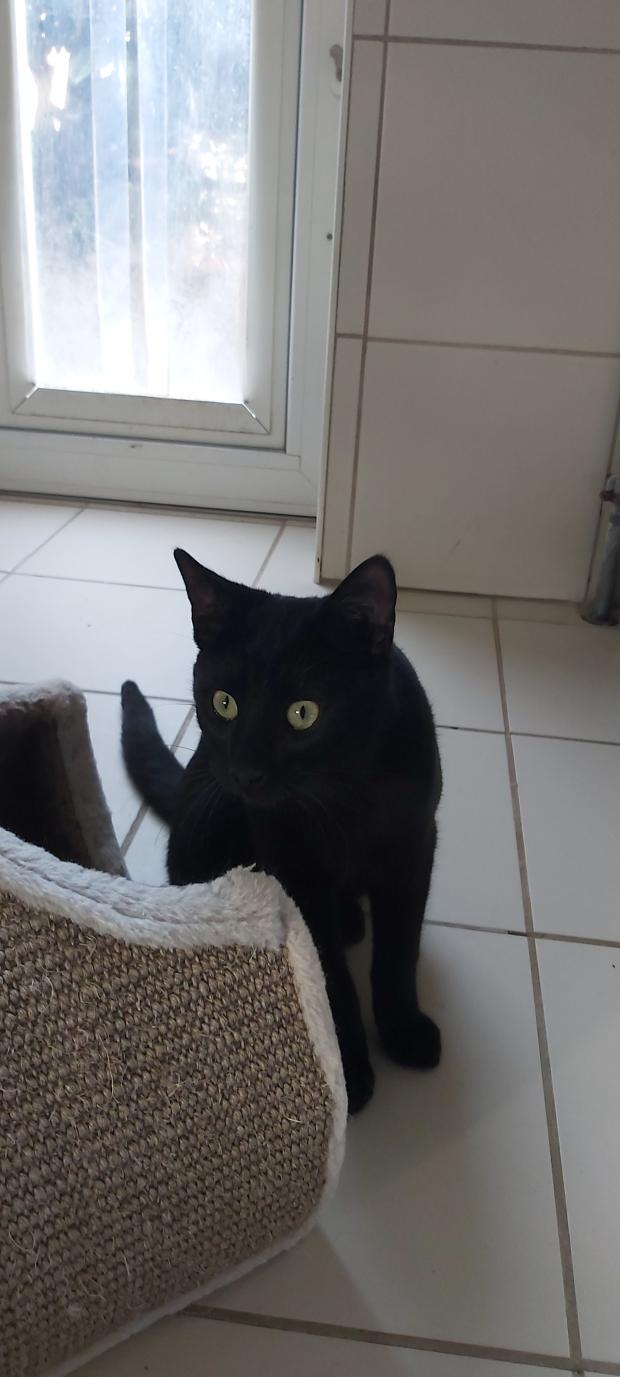 Adopter RUFUS, chat male de 9 mois