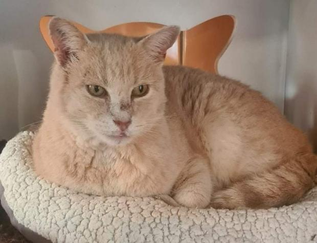 Adopter SARGAS, chat male de 5 ans