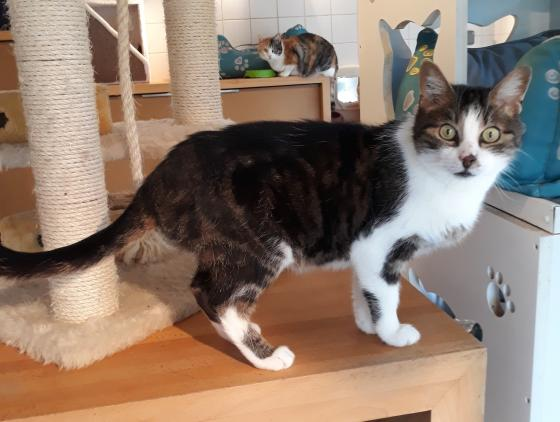 Adopter SCENIC, chat male de 13 ans