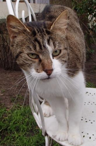 Adopter SAMSUNG, chat male de 7 ans