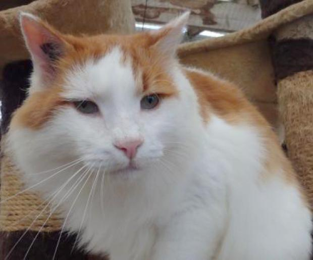 Adopter SCAR, chat male de 14 ans