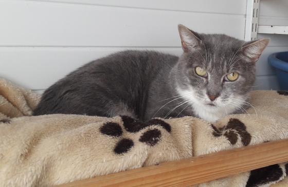 Adopter SOJA, chat europeen male de 11 ans