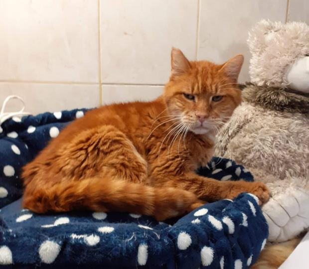 Adopter TITINOU, chat europeen male de 16 ans