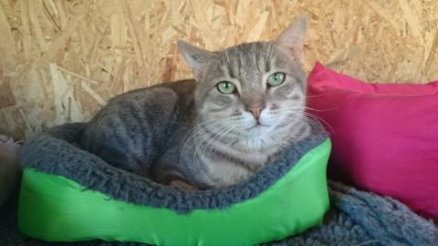 Adopter TONO, chat male de 9 ans