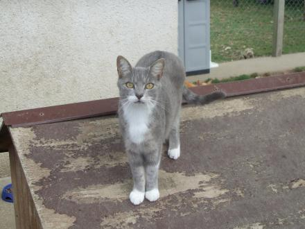 Adopter TALIA, chat femelle de 13 ans