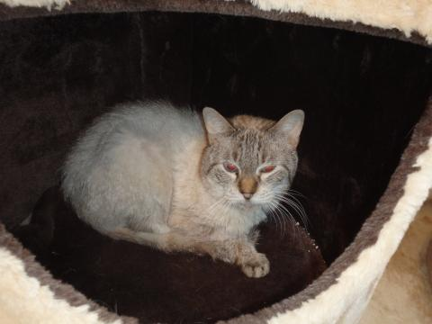 Adopter VULCAIN, chat male de 13 ans