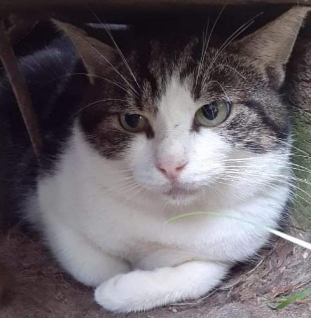 Adopter WENDELL, chat male de 3 ans