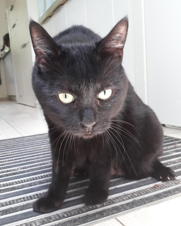 Adopter WELCOME, chat male de 12 ans