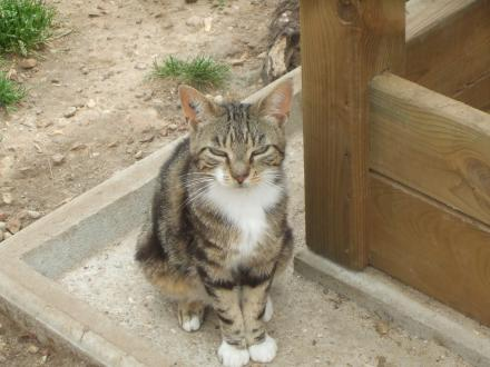 Adopter WILLOW, chat europeen male de 9 ans