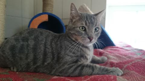 Adopter YUKA, chat europeen male de 7 ans