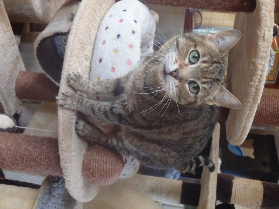 Adopter BALY, chat femelle de 9 ans