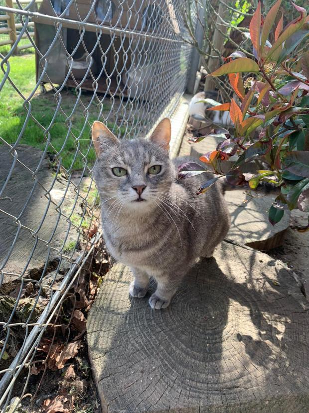 Adopter CHARLOTTE, chat femelle de 8 ans