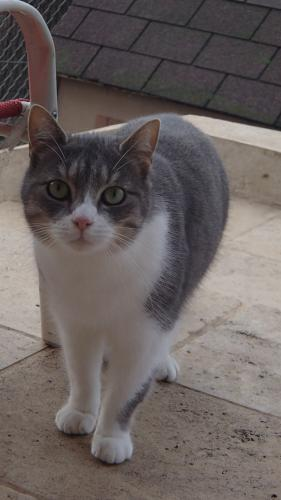 Adopter DANY, chat male de 9 ans