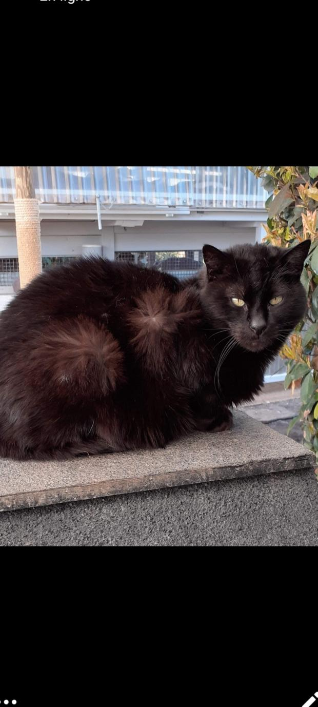 Adopter GUIROU, chat europeen male de 11 ans
