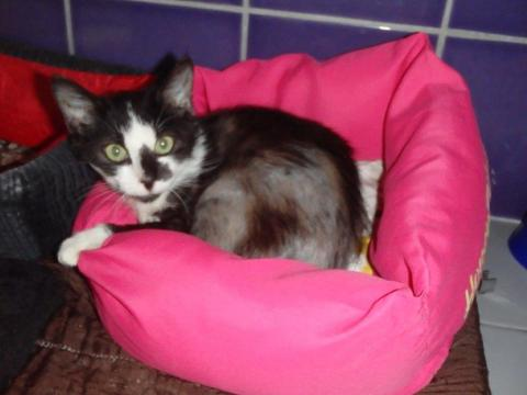 Adopter HOOPER, chat male de 2 ans