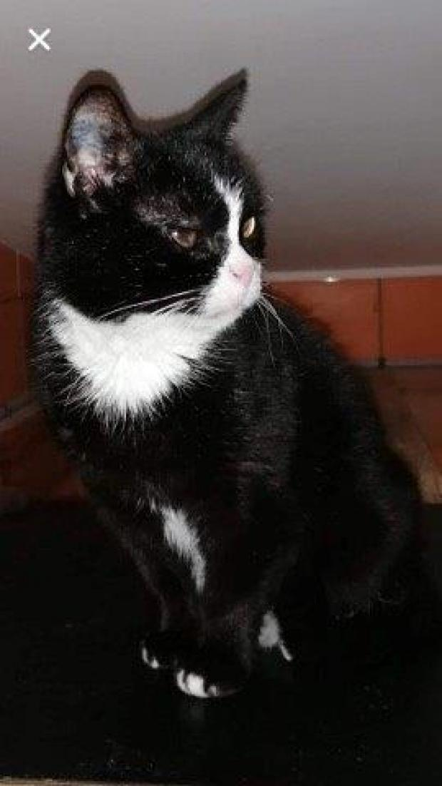 Adopter Koike, chat male de 6 ans