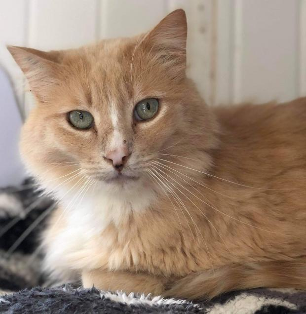 Adopter LINK, chat male de 7 ans