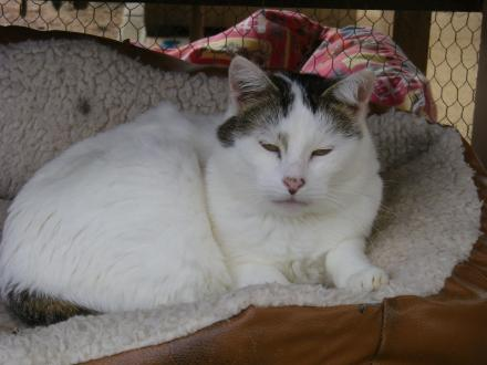 Adopter LOLA, chat femelle de 15 ans