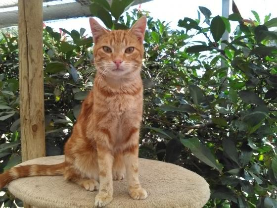 Adopter LUIGI, chat europeen male de 4 ans