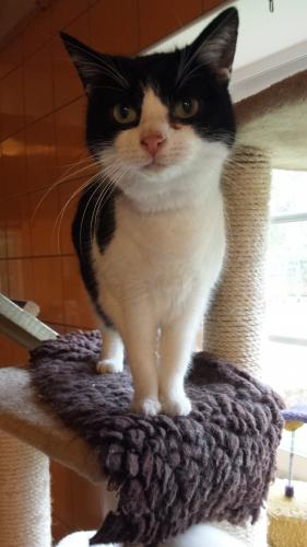 Adopter NUISETTE, chat femelle de 15 ans