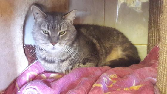 Adopter OMALLEY, chat male de 10 ans