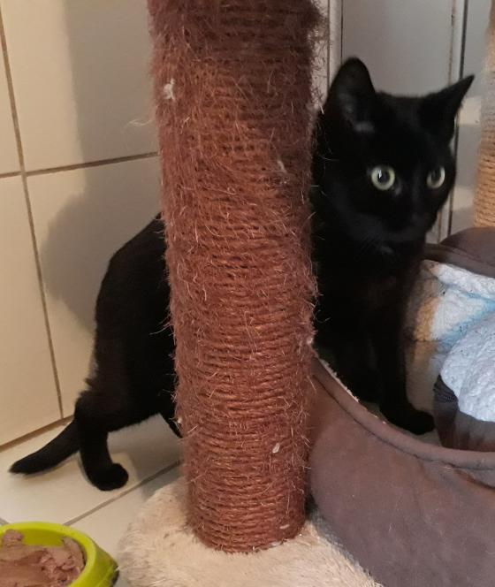 Adopter OMERE, chat femelle de 3 ans