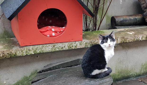 Adopter OSLO, chat europeen male de 12 mois