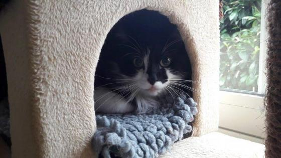 Adopter PACHA, chat male de 8 ans