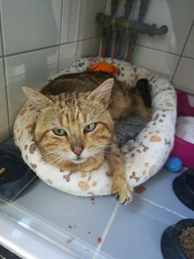 Adopter smith, chat male de 2 ans