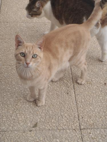 Adopter SPIROU, chat male de 6 ans
