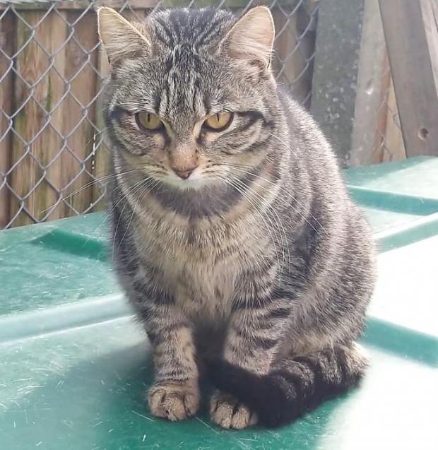 Adopter ZAHO, chat femelle de 3 ans