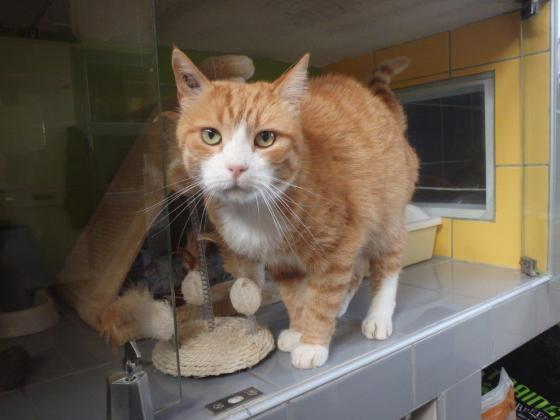 Adopter ZEBULON, chat europeen male de 5 ans