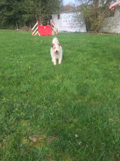 Adopter KENOBI, chien terrier male de 12 ans