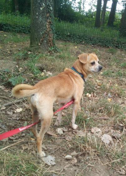 Adopter AIME dit MANY, chien chihuahua male de 5 ans