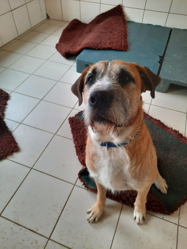 Adopter OSKO, chien berger male de 3 ans