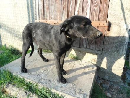 Adopter RIRI, chien retriever male de 7 ans
