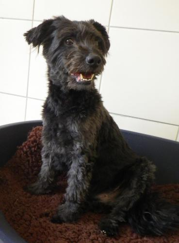 Adopter VICTOR, chien griffon male de 14 ans