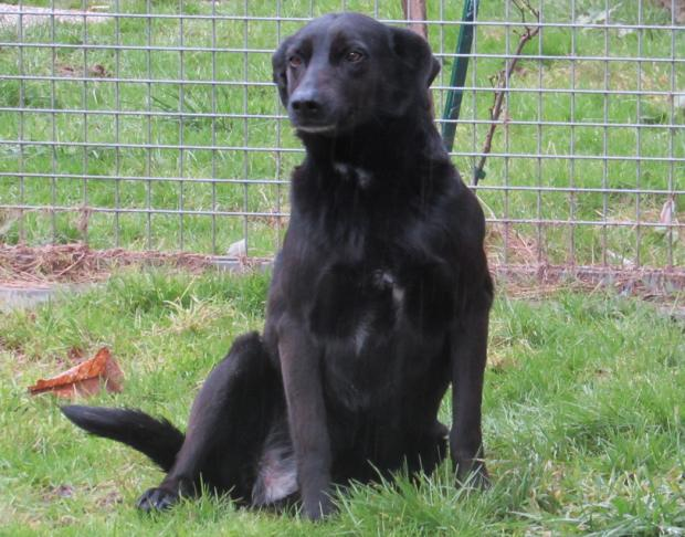 ARAMISSE retriever