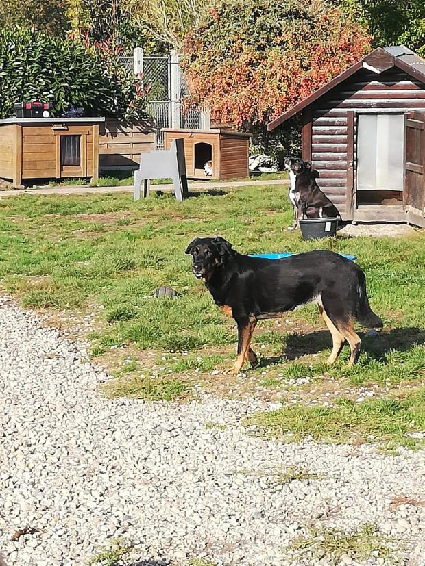 MOUNA beauceron